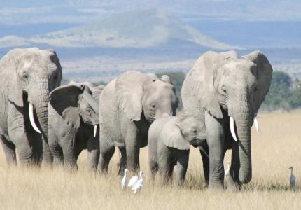 7 Days Masai Mara/ Nakuru/ Amboseli
