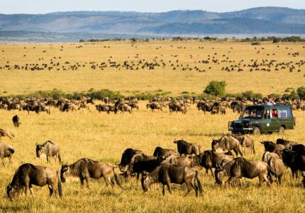 5 Days Masai Mara/ Lake Nakuru Camping